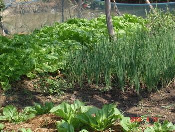 เพราะเป็นคนบ้านๆ ติดดิน งานนี้ปอยฝ้ายเลยเกิดไอเดีย เนรมิตพื้นที่ในบ้านหลังใหญ่ของตนเอง  เอาไว้ปลูกพืชผักสวนครัวที่ชอบกินมากมายหลายสายพันธุ์ไว้เต็มไปหมด ...